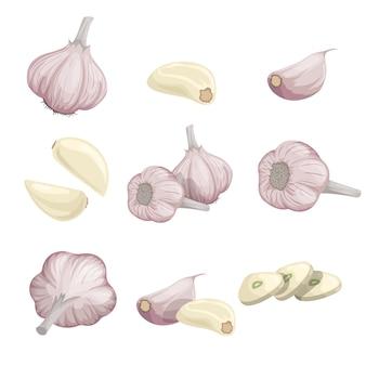 Insieme di garlics del fumetto. aglio intero, pelato, chiodi di garofano e gruppi di aglio. semplice. raccolta di illustrazioni su sfondo bianco.