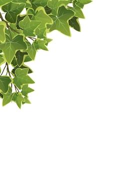 Foglie e rami della pianta dell'edera del fumetto su fondo bianco