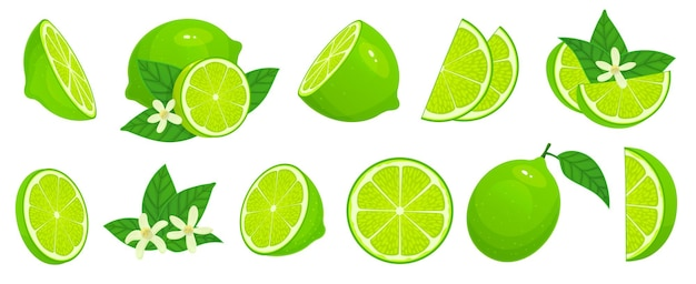 Calce del fumetto. fette di lime, agrumi verdi con foglie e set di illustrazione isolato fiore di tiglio.