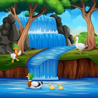 Cartone animato molte anatre che giocano sulla cascata