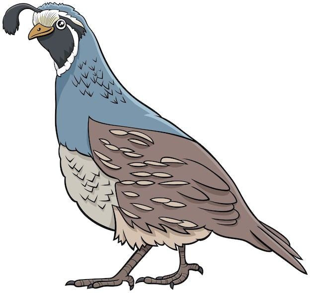 Cartone animato quaglia uccello fumetto carattere animale
