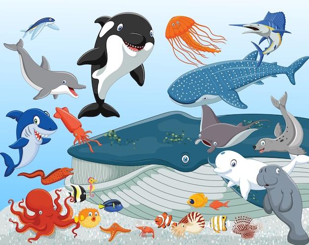 Cartoon animali marini
