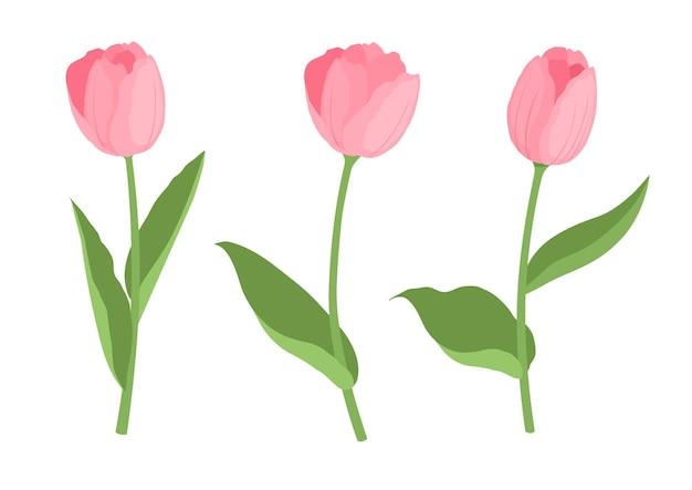 Insieme del fumetto del tulipano sveglio del giardino