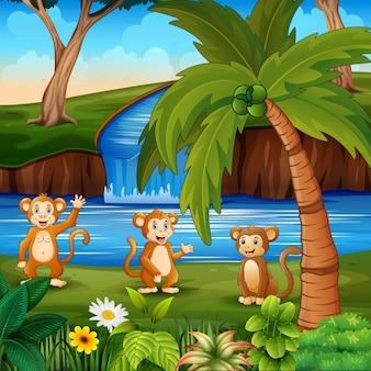 Cartoon tre di scimmie in riva al fiume