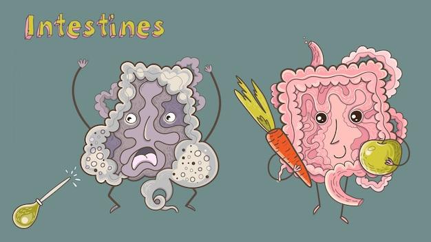Fumetto illustrazione vettoriale di intestini sani e malati. illustrazione educativa divertente.