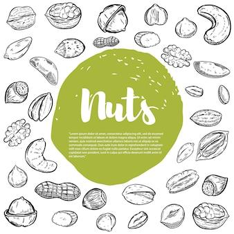 Anacardi, nocciole, noci, pistacchi, noci pecan. schizzi di noci. elementi per menu, volantino. illustrazione