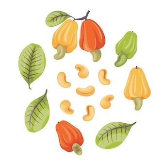 Illustrazione di anacardi e foglie