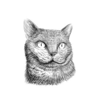 Faccia di british shorthair di razza gatto, disegno in bianco e nero di schizzo. animale domestico disegnato a mano