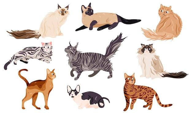 Collezione di razze di gatti