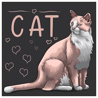 Progettazione di massima del gatto