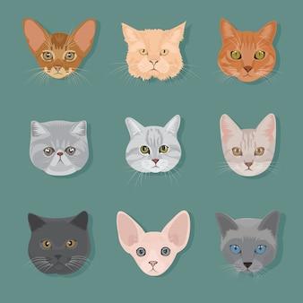 Set di tipi di testa di gatto
