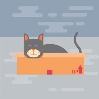 Gatto che dorme nella scatola