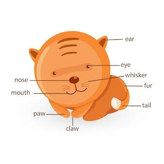 Parte del vocabolario gatto del vettore del corpo