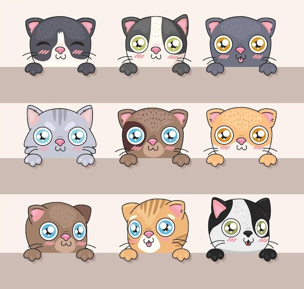 Set facce di gatti