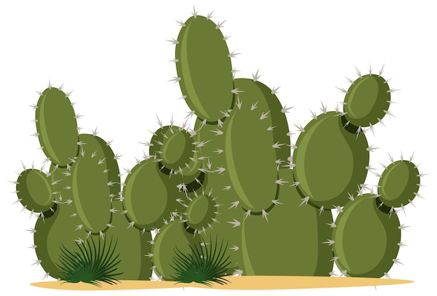 Catus piante in stile cartone animato su bianco
