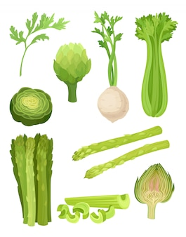 Set di sedano concetto di alimenti biologici. illustrazione.