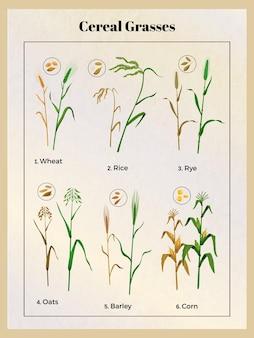 Poster vintage di erbe di cereali