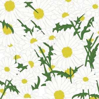 Illustrazione vettoriale isolato sfondo floreale di camomilla. ornamento di fiori di design sullo sfondo. disegno estivo.