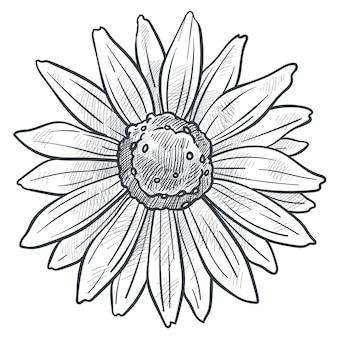 Vettore di schizzo monocromatico di fiori di camomilla in fiore