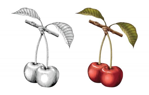 Illustrazione d'annata dell'incisione del disegno della mano della ciliegia in bianco e nero con colore di riempimento