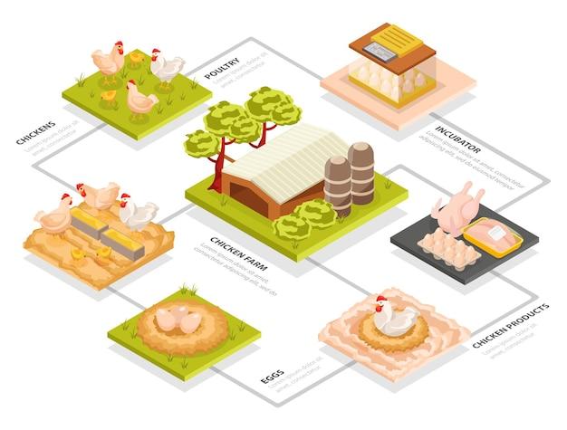 Diagramma di flusso isometrico dell'allevamento di polli