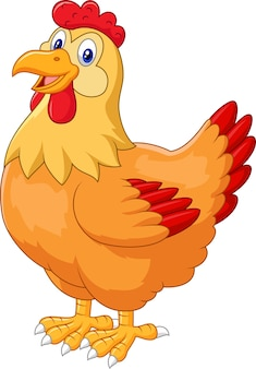 Pollo gallina carina in posa