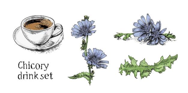 Set di foto della bevanda alla cicoria (pianta, fiore, tazza di bevanda)