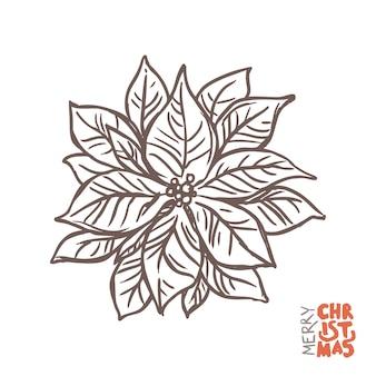 Illustrazione della pianta della stella di natale con il poinsettia.