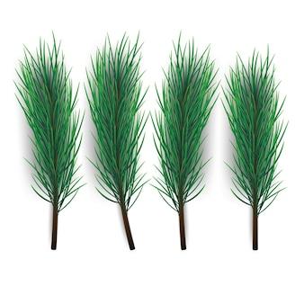 Ramo di albero di natale ramo di abete o pino verde lussureggiante isolato su sfondo bianco