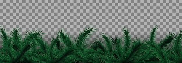 Rami di albero di natale in sfondo trasparente.