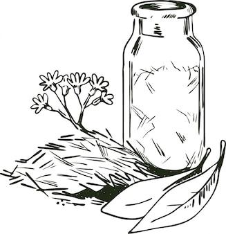 Illustrazione vettoriale di corteccia di cinchona. fiori e foglie in fiore, bottiglia con erbe secche