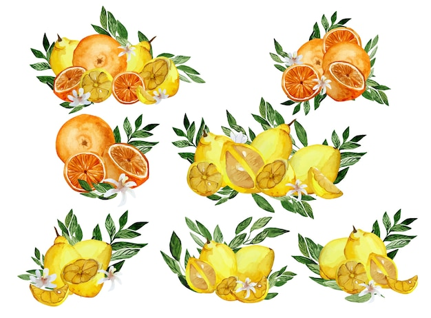Insieme dell'acquerello di composizioni di agrumi arancia e limone