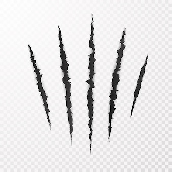 Illustrazione del segno di graffio di artiglio