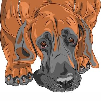 Razza di dane del cane domestico di schizzo del primo piano