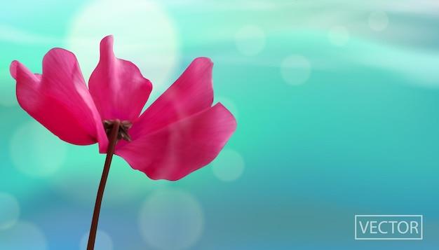 Primo piano del fiore su sfondo blu bokeh.