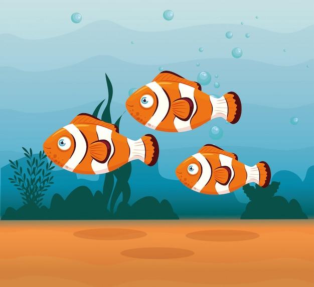 Animali del pesce pagliaccio nell'oceano, abitanti del mondo marino, simpatiche creature sottomarine, fauna sottomarina