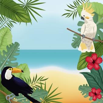 Cockatoo e tucano lascia la spiaggia tropicale
