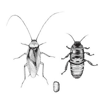 Mano di scarafaggio disegno stile vintage