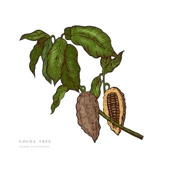 Illustrazione di fave di cacao. illustrazione stile inciso. fave di cacao al cioccolato. illustrazione