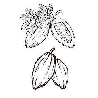 Illustrazione del disegno della mano del cacao o del cioccolato