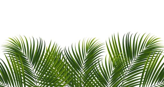 Foglie di cocco su sfondo bianco con tracciato di ritaglio per elemento di design foglia tropicale vettore