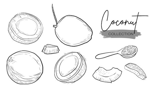 Collezione di tratteggio di schizzi del disegno della mano della fetta della noce di cocco