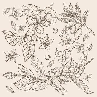Schizzo rustico di chicchi di caffè e fiori