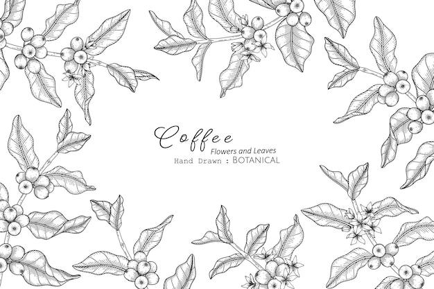 Illustrazione botanica disegnata a mano di fiori e foglie di caffè con line art.