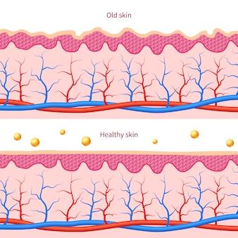 Collagene effetto pelle umana