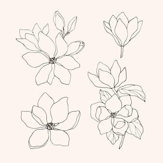 Collezione di fiori di magnolia disegnati a mano