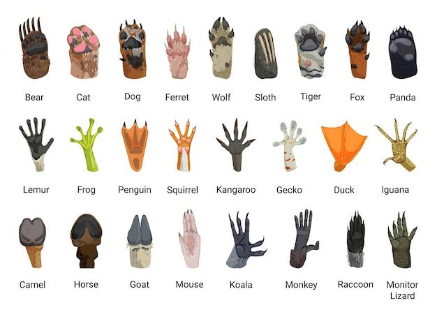 Collezione di zampe di animali