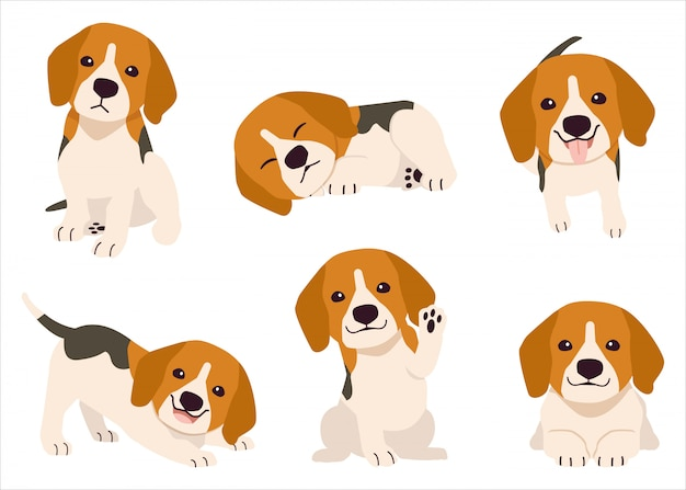 La collezione di beagle in molte azioni. illustrazione