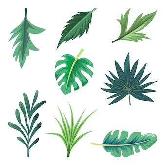 Raccolta di belle foglie tropicali isolate