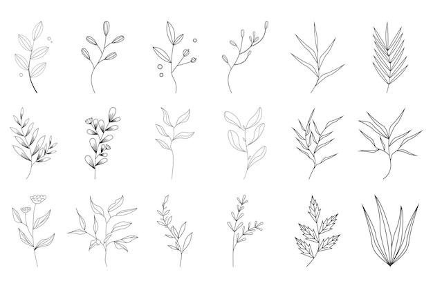 Collezione botanica floreale disegnata a mano